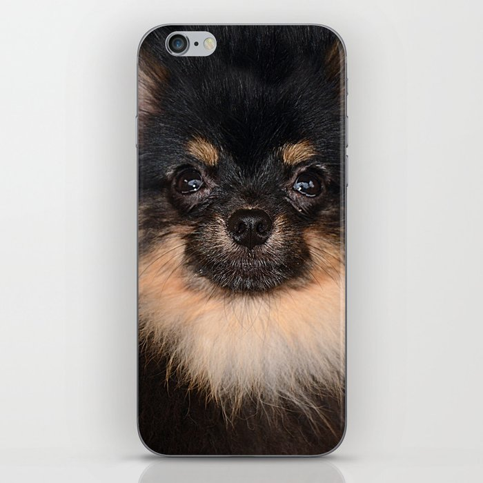 Pomeranian iPhone Skin