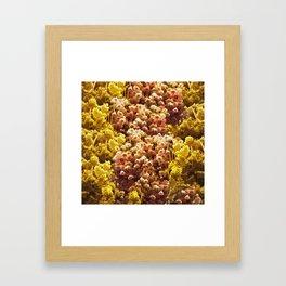 Dry flowers Framed Art Print