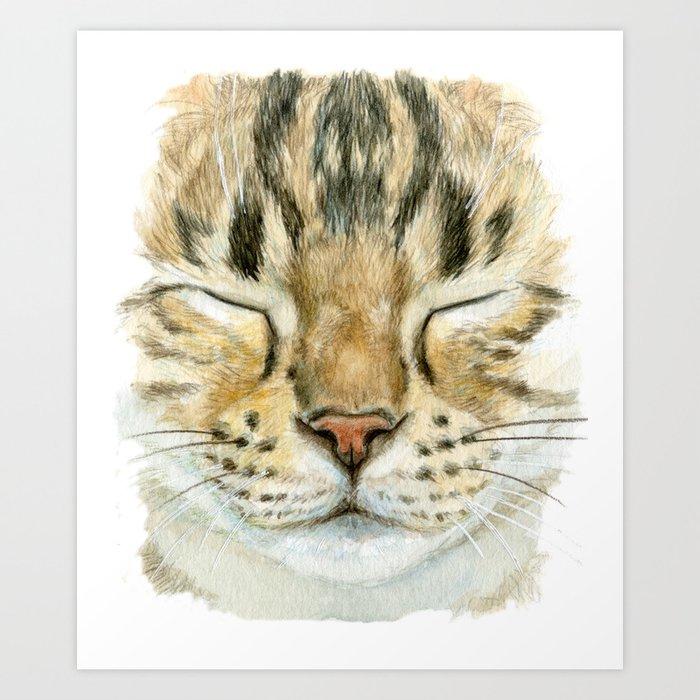 Sleeping Tabby Cat  830 Art Print