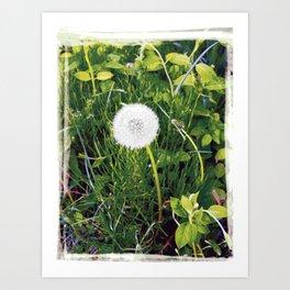 Dandelion 01 Art Print