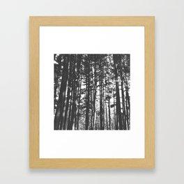 Tall Trees Framed Art Print