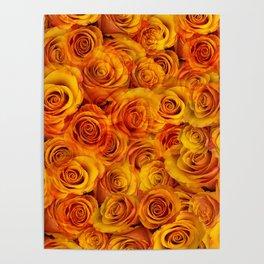 Grenadier Tangerine Roses Poster