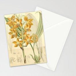 Flower 7262 moorea irrorata Stationery Cards