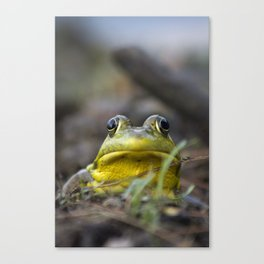 Northern Green Frog Canvas Print