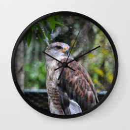 Hawk Looking Right Wall Clock