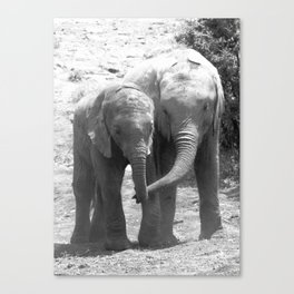 Elephant friends Canvas Print