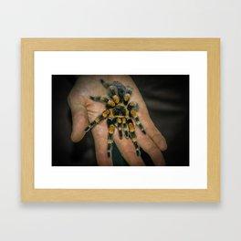 Tarantula Spider Framed Art Print