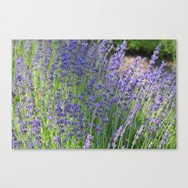 Lavender Wave Canvas Print