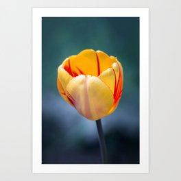 Colorful Tulip Art Print