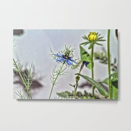 Blue Nigella Metal Print