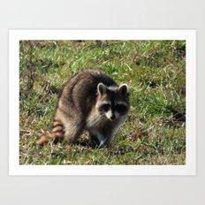 raccoon 2016 III Art Print