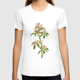 Cuvier's Regulus T-shirt