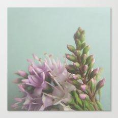 Floral Variations No. 9 Canvas Print