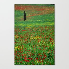 Tuscan landscape with poppies and cypress  Canvas Print