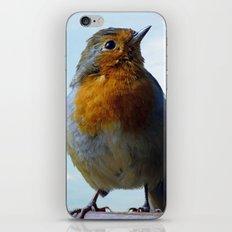 Fluffy Robin Redbreast iPhone & iPod Skin