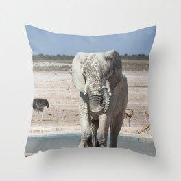 Animal Kingdom 5 Throw Pillow
