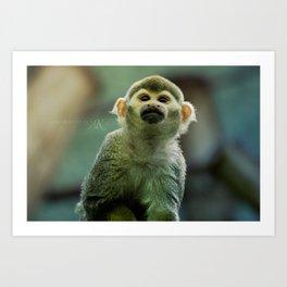 ... common squirrel monkey ... Art Print