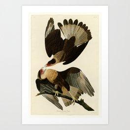 161 Brasilian Caracara Eagle Art Print