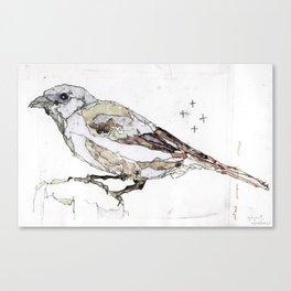 Bird Illustration Canvas Print