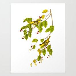 Carbonated Warbler Bird Art Print
