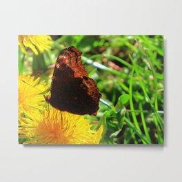 Butterfly | Floral | Flowers | Spring Metal Print