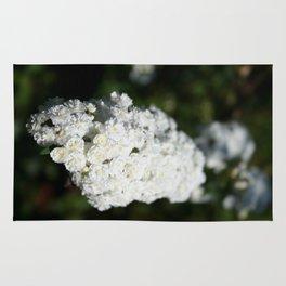 Deutzia White Spring Blossoms Rug