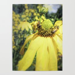 Bees on Yellow Flower Poster