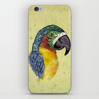 parrot iPhone & iPod Skins featuring Parrot by SilviaGancheva