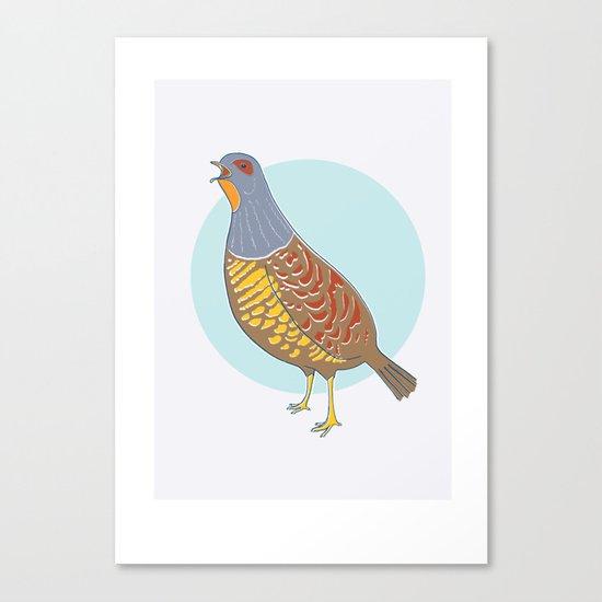 Swinhoe's Pheasant Canvas Print