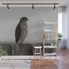 Red Tailed Hawk Wall Mural