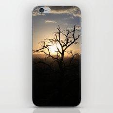 Skimpy Tree Glows iPhone & iPod Skin