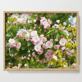 the Apple trees in bloom Serving Tray