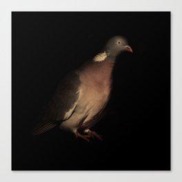 Woodpigeon Portrait Canvas Print