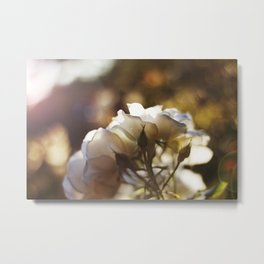 "Flower Art Print - White, Peach, Yellow Print - Shabby Chic Wall Art - Home Decor - ""White Roses"" Metal Print"