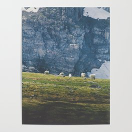 Beartooth Mountain Goats Poster