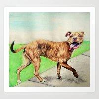 pitbull Art Prints featuring pitbull by Shannon Gordy