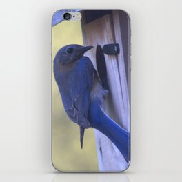 Eastern Bluebird Home iPhone Skin