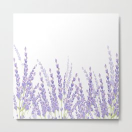 Lavender in the Field Metal Print