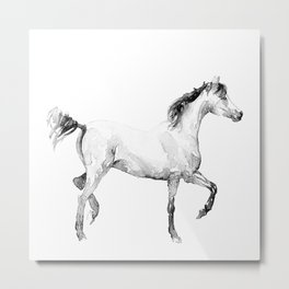 The slender horse Metal Print