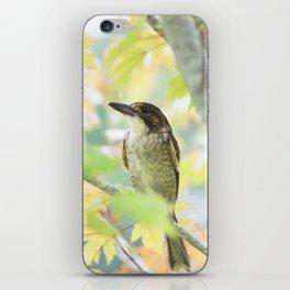 Australian Butcher Bird iPhone Skin