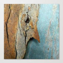 Eucalyptus tree bark texture 10 Canvas Print