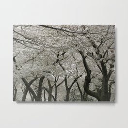 """Crab Apple and Sakura"" Metal Print"