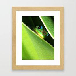 Eyes in the Grass Framed Art Print