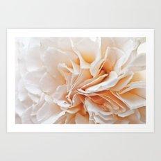 Old Style Rose Flower 3464 Art Print