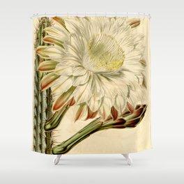 Cereus aethiops Shower Curtain