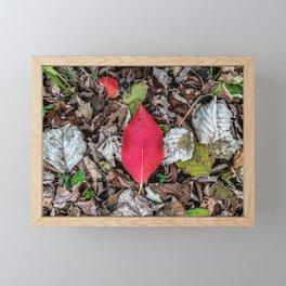 Persimmon tree red leaf Framed Mini Art Print
