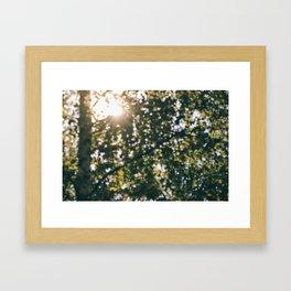 Memory of Summer Framed Art Print
