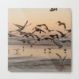 Seagull Birds Flying at Sunset on the Beach in California Photography, Beach Art, California Coast Home Decor, Fine Art Photography Metal Print