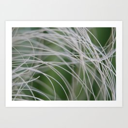 Rainforest Palm Tree Leaf Close Up  Art Print