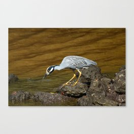 This Looks Very Interesting Canvas Print